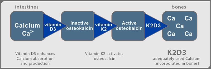 K2-D3-osteocalcina