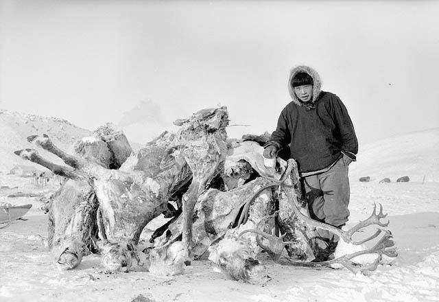 inuit-caribou