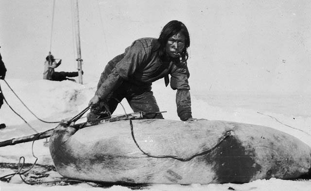 inuit with seal