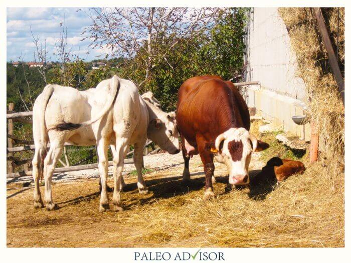 casa serra bovini grass fed