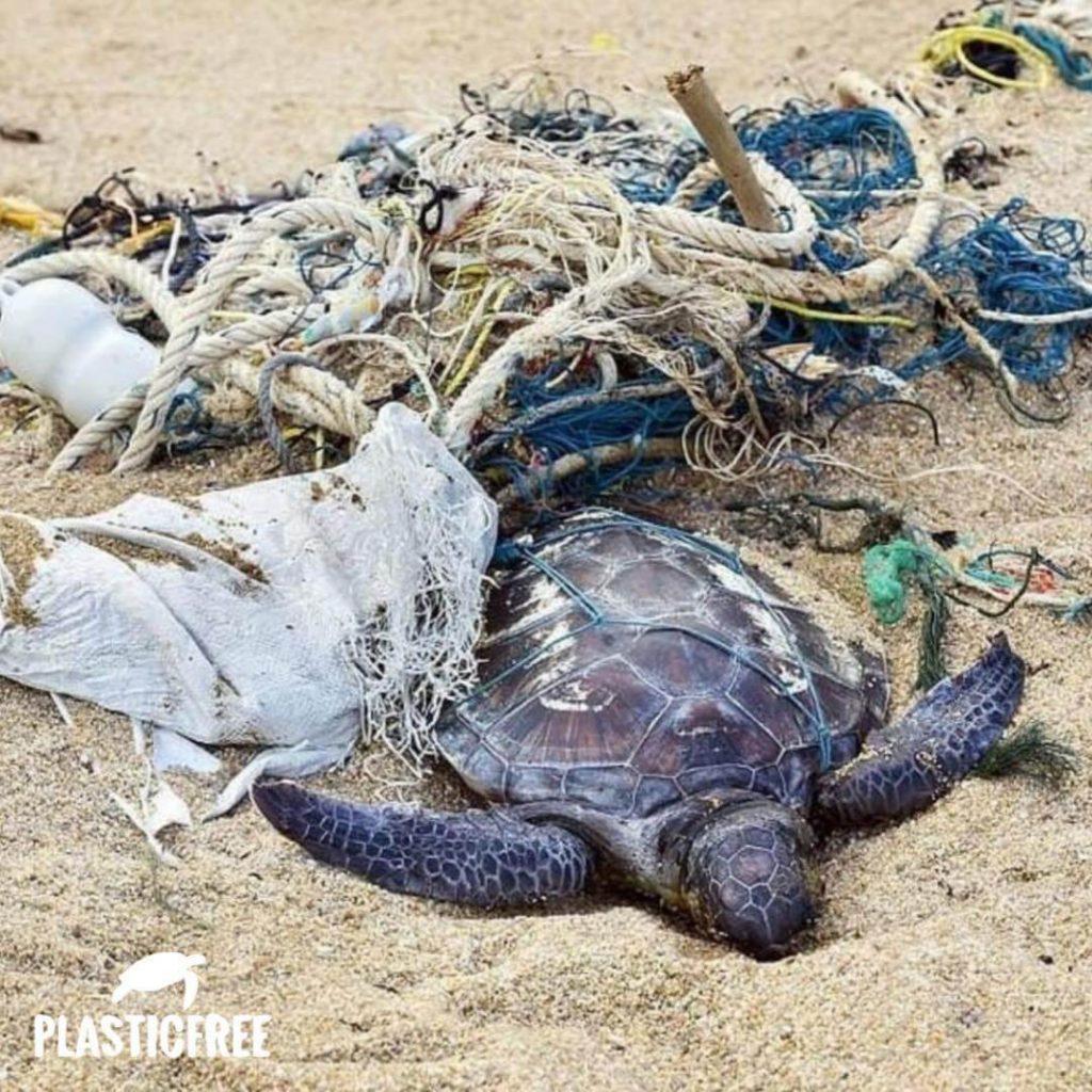 tartaruga immersa nella plastica