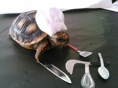 slow-cooking funny turtle