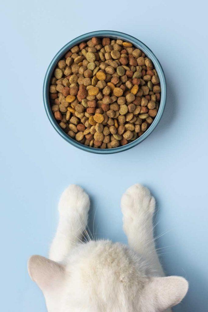 paleo-dieta-gatto-croccantini
